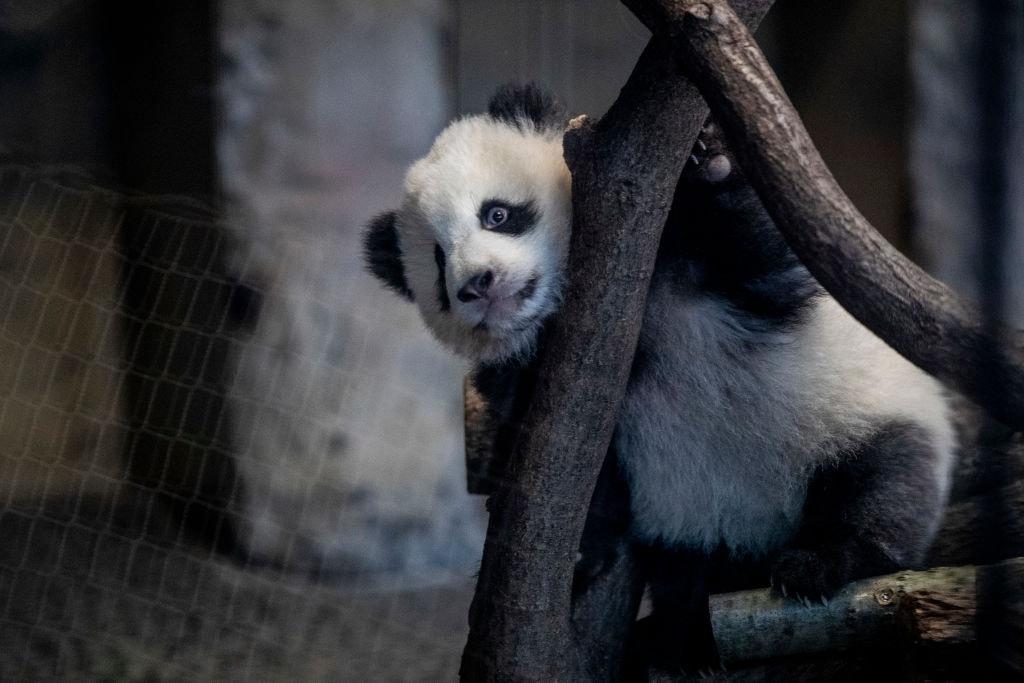 Naked Rollerblader Hood Panda Posts Frontal Version Of His